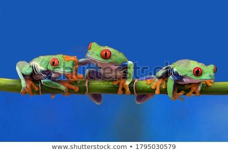 Boomkikker vergadering wijnstok tropische boom Rood Stockfoto © macropixel