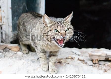 Macska utca száj fehér állat pózol Stock fotó © kyolshin