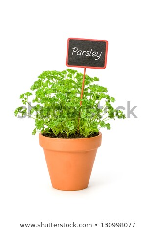 Parsley In A Clay Pot With A Wooden Label Photo stock © Zerbor