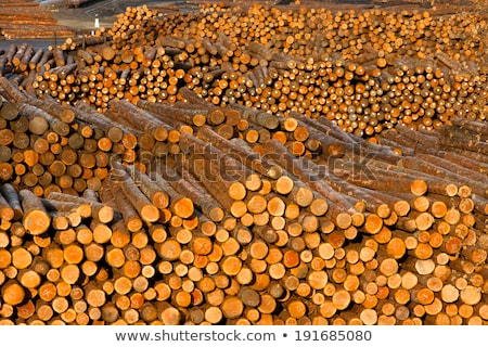 Log Ends Wood Rounds Cut Measured Tree Trunks Lumber Mill Stock photo © cboswell