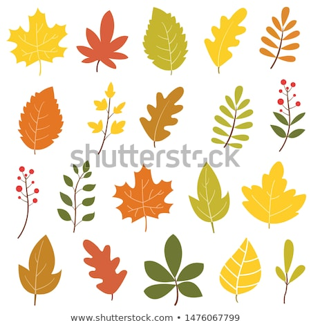 Yellow fall leaves on a red background. Stock photo © beholdereye