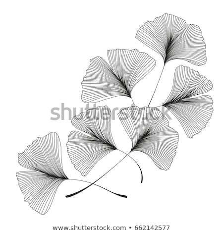 Ginkgo leaf Stock photo © rbiedermann