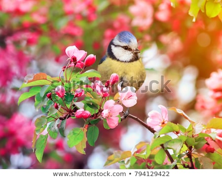 Titmouse spring wild out in nature. Stock photo © justinb