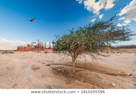Eenzaam boom woestijn Jeruzalem Israël hemel Stockfoto © Zhukow