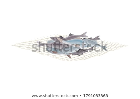 a pile of fishing nets  Stock photo © mady70