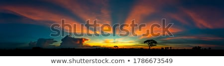 Stock photo: Sunset  with silhouette trees