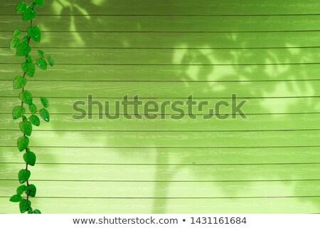 Textur farbenreich grünen befleckt Holzstruktur Holz Stock foto © ozgur