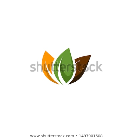 Three green leaves Stock photo © bluering