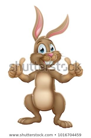 Conejo · de · Pascua · feliz · diseno · fondo · animales - foto stock © wetzkaz