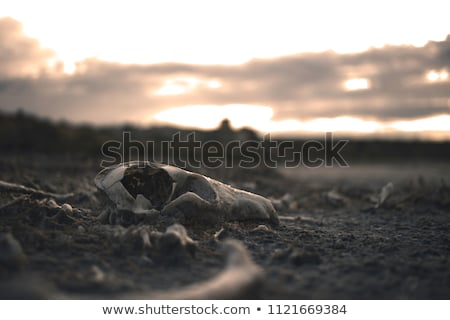 völgy · elhagyatottság · egyedi · tájkép · ökoszisztéma · város - stock fotó © markdescande