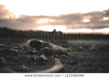 Vadi manzara ekosistem kasaba Stok fotoğraf © markdescande