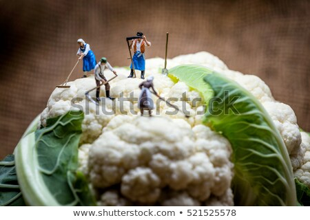 Miniature farmers working in cauliflower field. Macro photo Stock photo © Kirill_M