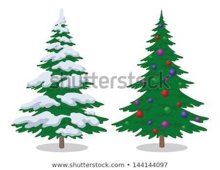 Dwa christmas drzew śniegu sezon zimowy drzewo Zdjęcia stock © orensila
