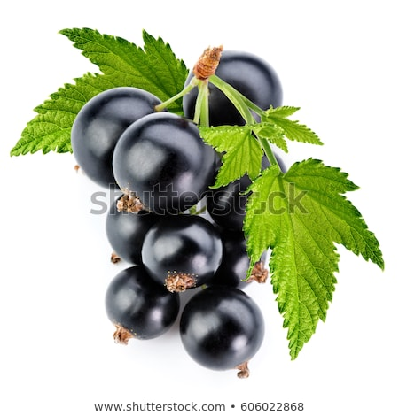 Blackcurrant berries with leaves, black currant Stock photo © yelenayemchuk