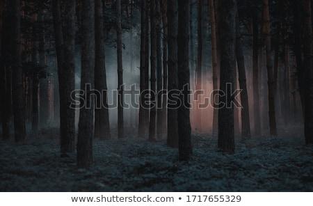 Foto stock: Floresta · noite · pinho · árvores · escuro · blue · sky