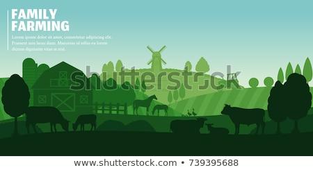 Rajz madarak farm szalag mezőgazdasági vidéki jelenet Stock fotó © Genestro