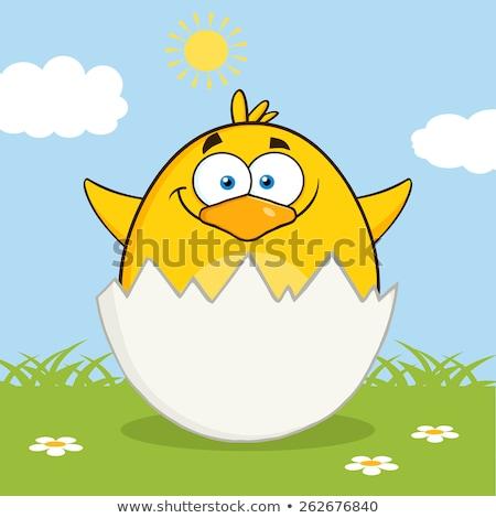 Surpresa amarelo pintinho fora ovo Foto stock © hittoon