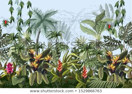 tropicales · frontera · diseno · colorido · vibrante · flores - foto stock © solarseven
