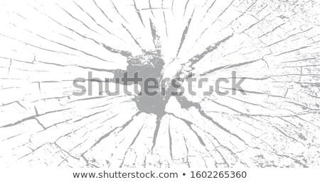 Crack grunge miejskich drzewo szkła gleby Zdjęcia stock © kyryloff