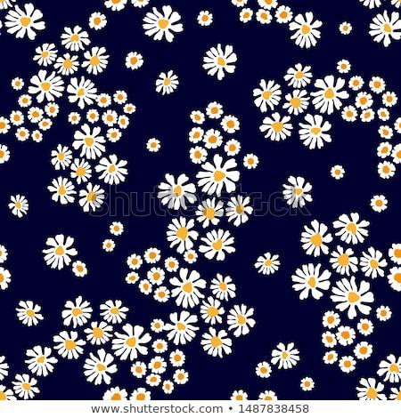Noir Daisy fleur pétales fleurir résumé Photo stock © Anneleven
