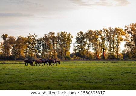 Mare and foal grazing Stock photo © RazvanPhotography