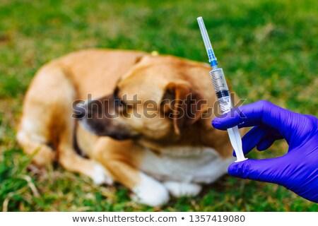 врач ветеринар иглы шприц профессиональных ветеринар Сток-фото © lovleah