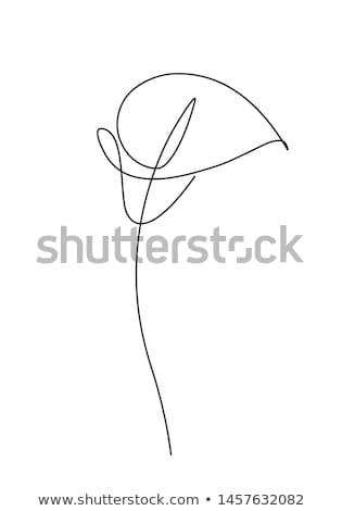 Jaune Lily fleur noir résumé jardin Photo stock © Calek