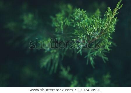 verde · abstrato · fresco · árvore · natureza · mundo - foto stock © newt96
