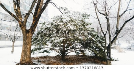 kar · kapalı · ahşap · dışında · orman - stok fotoğraf © ondrej83