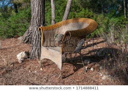 Abandoned chair on the field Stock photo © CaptureLight