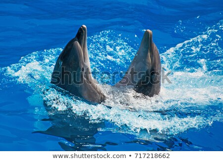 Two dolphins dancing Stock photo © digitalr
