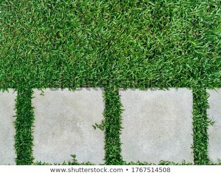 Flagstone walkway green background. Stock photo © scenery1