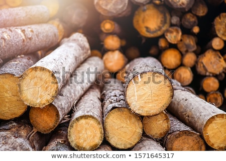 Pile of Softwood Logs in Spruce Forest Stock photo © tainasohlman