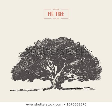 verde · árvore · folha · jardim · fundo · fazenda - foto stock © mikko