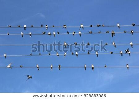 uccelli · seduta · filo · vettore · sfondo - foto d'archivio © tungphoto