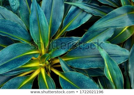 seamless colorful natural background Stock photo © Elmiko