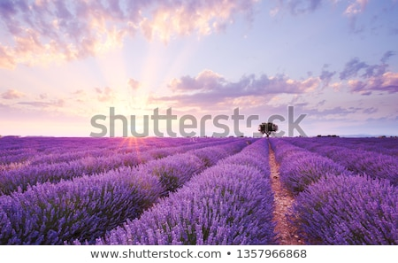 Stock foto: Purple Sky Over Lonely Tree