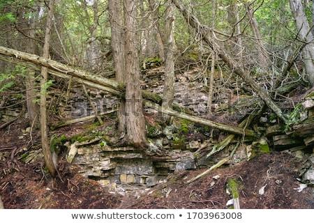 деревья лес Онтарио Канада природы фотографии Сток-фото © bmonteny