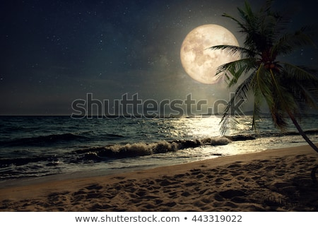 Tropical Beach at Night Moonlight, with Palm trees. Stock photo © ankarb