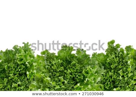 Dolny granicy świeże sałata zielone Sałatka Zdjęcia stock © ozgur