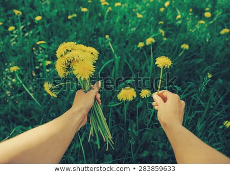 girl holding flowers in hand green meadow stock photo © lunamarina