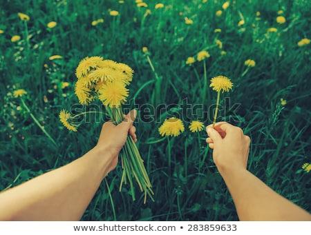 piękna · dziecko · kwiaty · wiosną · zielone · łące - zdjęcia stock © lunamarina