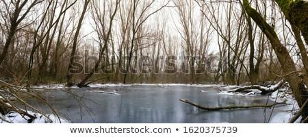 Névoa velho árvore congelada rio paisagem Foto stock © goce