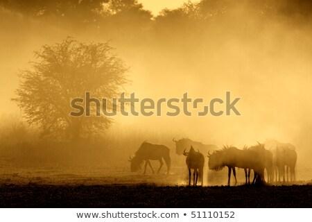 Blue wildebeest in dust Stock photo © EcoPic