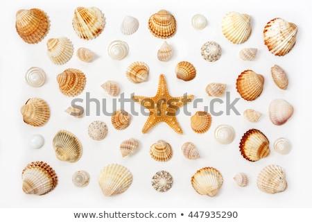 Tenger kagylók homok tengerpart háttér utazás Stock fotó © IvicaNS