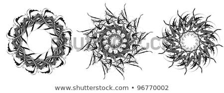 Vektor · schwarz · weiß · Spitze · dekorativ · Muster - stock foto © creatorsclub