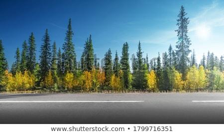 erdő · dominancia · kerület · régió · Ukrajna - stock fotó © joyr