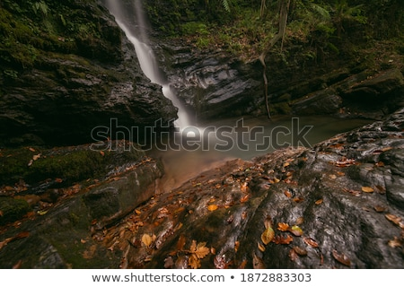autumn wet leaves background over rocks stock photo © simply