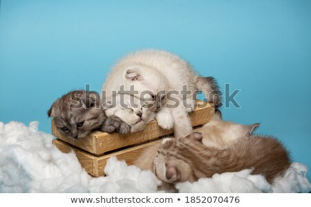 Chat nuage soft pelucheux animal ciel Photo stock © popaukropa