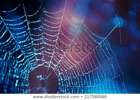 spider web with shiny blue drops stock photo © vapi